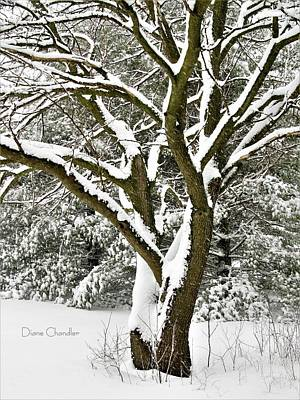 Photograph - Hawk's Tree In The Snow by Diane Chandler