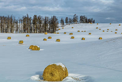 Photograph - Hay Bales Rest In A Snowy Field, Cowboy Trail, Alberta, Canada by David Butler