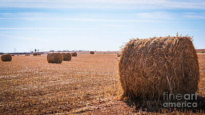 Photograph - Hay Rolls by Dheeraj Mutha