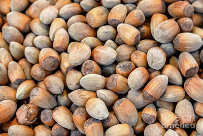 Rights Managed Images - Hazelnuts in a bunch freshly harvested and delicious Royalty-Free Image by Frank Bach