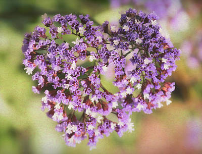 Photograph - Heart Of Sea Lavendar  by Saija Lehtonen