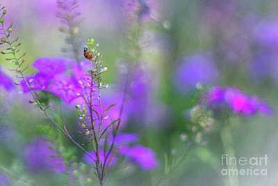 Photograph - Heartsong In The Meadow by Mary Lou Chmura