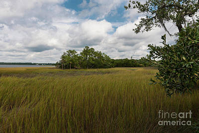 Photograph - Heavenly Marsh by Dale Powell