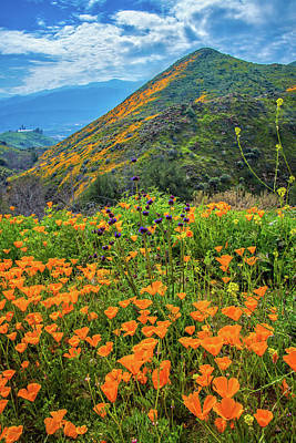 Photograph - Heavenly Wildflowers In Walker Canyon by Lynn Bauer