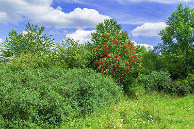 Photograph - Hedge Of Wild Shrubs And Trees by Sun Travels