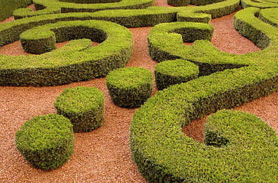 Photograph - Hedges Cut Into Patterns, Outdoors by Rob Atkins