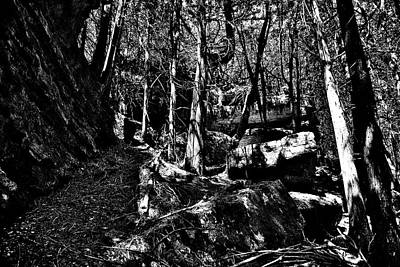 Photograph - Hell Holes Boulders And Trees by Jeremy Hall