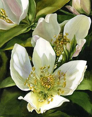 Painting - Hellebore  by Alfred Ng