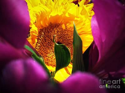 Photograph - Hello Yellow by Robert Knight