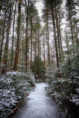 Photograph - Hemlock Forest Freeport Maine by Rick Berk