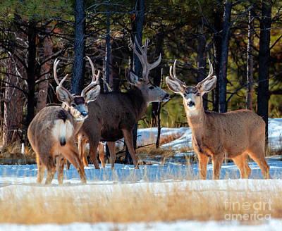 Photograph - Herd Of Deer On A Winter Morning by Steve Krull