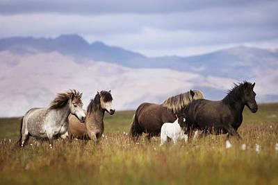 Photograph - Herd Of Horses by Gigja Einarsdottir