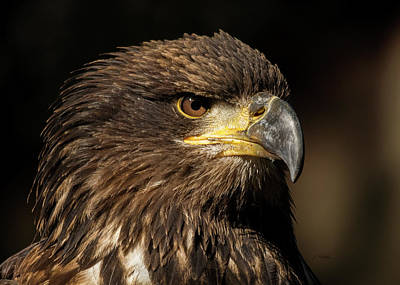 Photograph - Here And Now - Eagle Art by Jordan Blackstone