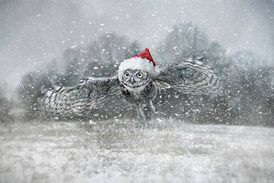 Photograph - Here Comes Santa Claws by Jai Johnson