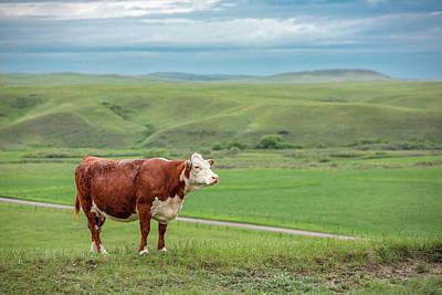 Photograph - Hereford Hill by Todd Klassy
