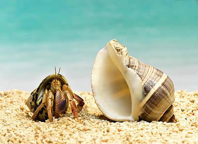 Hermit Crab Looking At Larger Shell Art Print by Jeffrey Hamilton