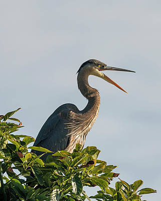 Photograph - Heron Lecture by Loree Johnson