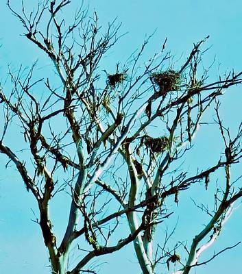 Photograph - Heron Nests by Judy Kennedy