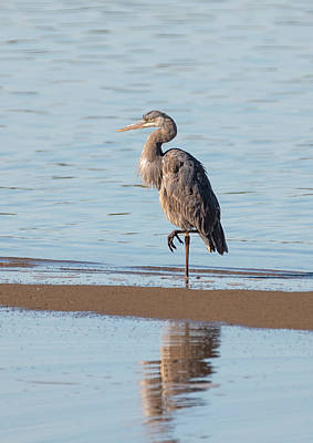 Photograph - Heron On The Beach by Loree Johnson