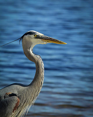 Photograph - Heron on the ICW by Storm Smith