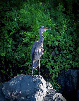 Photograph - Heron On The Rocks by Lora J Wilson