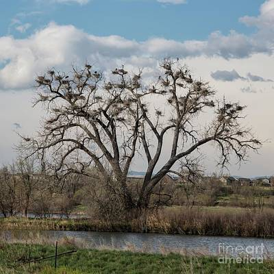 Photograph - Heronry by Jon Burch Photography