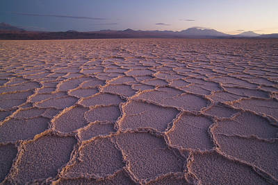 Photograph - Hexagons In Dry Salt Lake At Sunset by Theo Allofs/ Minden Pictures