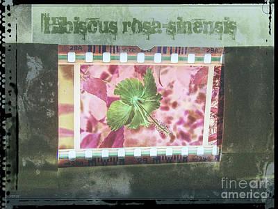 Digital Art - Hibiscus Filmstrip by Phil Perkins