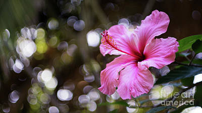 Photograph - Hibiscus Flower Bloom by Pablo Avanzini