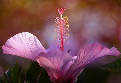Photograph - Hibiscus Pastel 2 by Fraida Gutovich