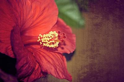 Photograph - Hibiscus Red by Carolyn Marshall