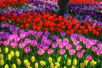 Photograph - Hidden Garden Of Beautiful Tulips by Garry Gay