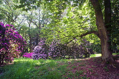 Photograph - Hidden Glade In Fairy Rhododendron Woods 1 by Jenny Rainbow