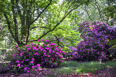 Photograph - Hidden Glade In Fairy Rhododendron Woods by Jenny Rainbow