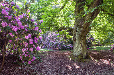Photograph - Hidden Glade In Rhododendron Woods by Jenny Rainbow