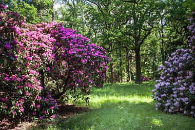 Pop Art - Hidden In Shadow. Fairy Rhododendron Woods 2 by Jenny Rainbow