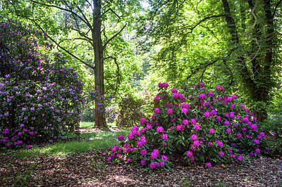 Photograph - Hidden In Shadow. Fairy Rhododendron Woods by Jenny Rainbow