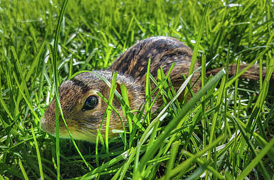 Photograph - Hiding In The Grass by Bill Pevlor