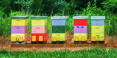 Photograph - High Density Bee Housing by Gary Slawsky