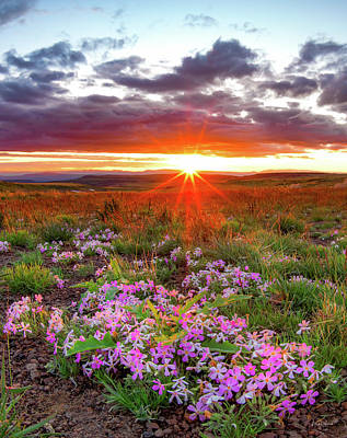 Photograph - High Desert Spring by Leland D Howard