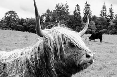 Whimsical Flowers - Highland Coo BW by Christi Kraft