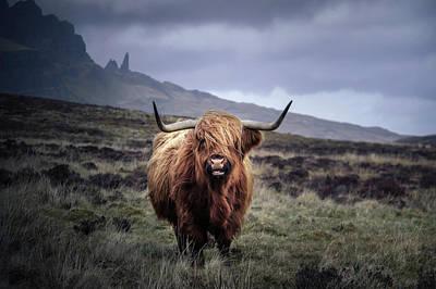 Wall Art - Photograph - Highland Cow, Scotland by Kristy Ashton