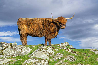 Photograph - Highlander In Scotland by Arterra Picture Library