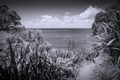 Wall Art - Photograph - Hiking On Tiritiri Matangi New Zealand Bw by Joan Carroll