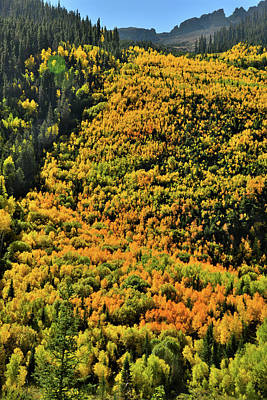Photograph - Hillside Of Color Along Ophir Road by Ray Mathis
