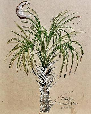 Drawing - Hiltonhead Palm Tree Study by C F Legette