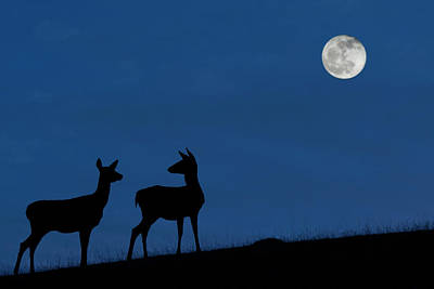Photograph - Hinds At Night by Arterra Picture Library