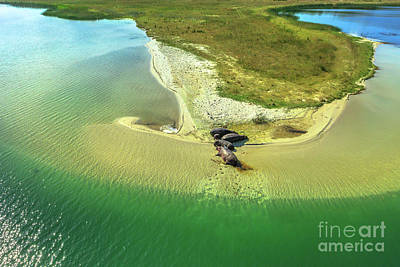Photograph - Hippopotamus Aerial View by Benny Marty