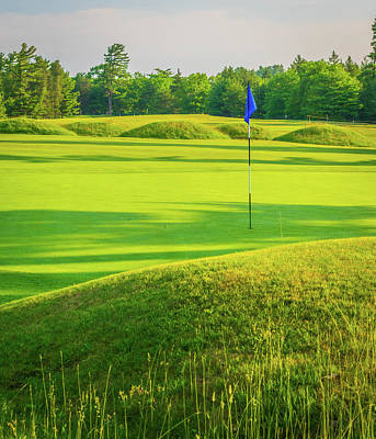 Bear Photography Rights Managed Images - Hitting the Links Royalty-Free Image by Aaron Geraud