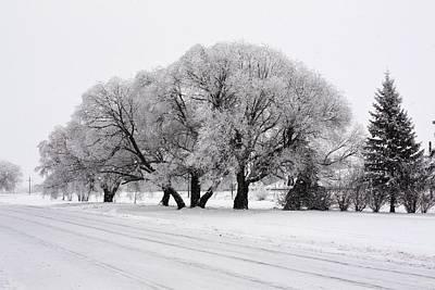 Photograph - Hoar Frost In Trees by David Matthews